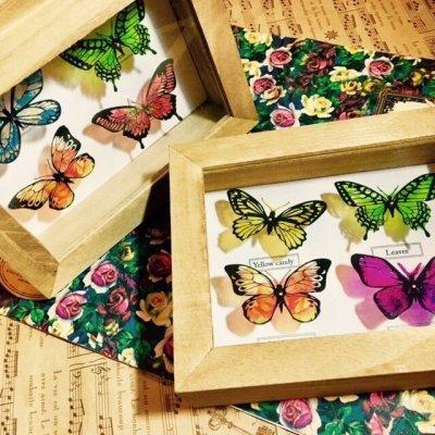 画像1: 【Shior Sion】・蝶 標本箱4匹入